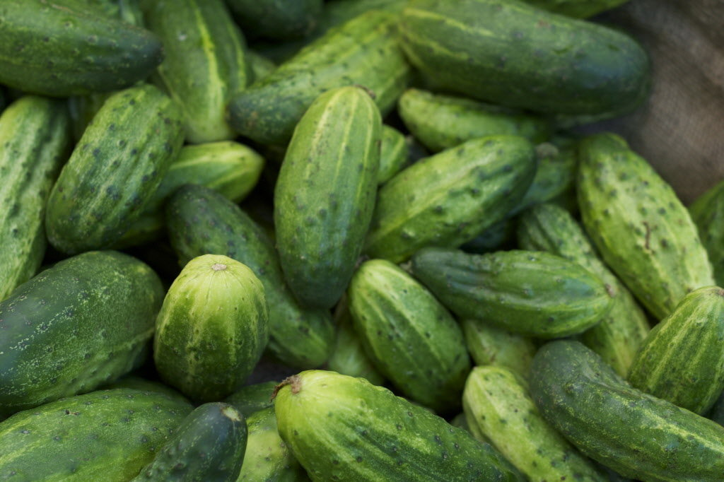 Like tomatoes, cucumbers are also easy to plant and grow. Eaten as raw ...